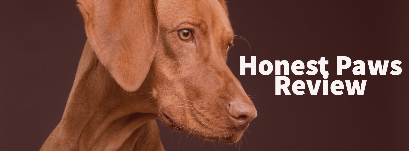 Honest Paws Review & Discount Code – My Honest Online Dog
